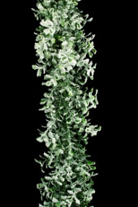 WL-GAR6-BXWD-FGR -  6' Boxwood Flocked Garland