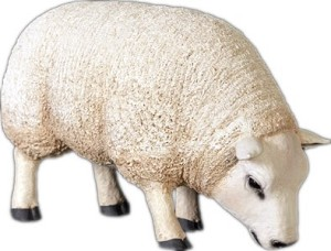 Life Size Sheep with Head Down