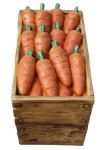 Large Case of Easter Carrots