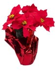WL-PS-POT - 5 Poinsettia Flowers in Gold Pot